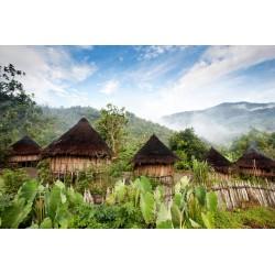 Papouasie Nouvelle Guinée Bio